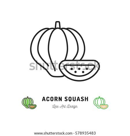 Acorn Squash icon Vegetables logo. Thin line art design, Vector outline illustration #578935483