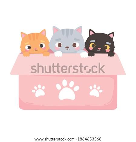 adopt a pet  cute three little
