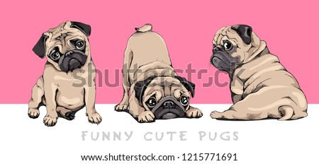 Adorable beige Pug puppies on a pink background. Humor set, hand drawn style print. Vector illustration.