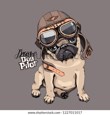 9f2c8359a Adorable beige puppy Pug in a aviator helmet. Brave dog pilot - lettering  quote.