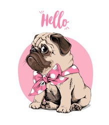 Adorable beige puppy Pug with a bow tie on a pink background. Hello - lettering quote. Humor card, t-shirt composition, hand drawn style print. Vector illustration.