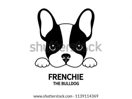 adorable french bulldog waiting