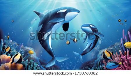 adorable killer whales family