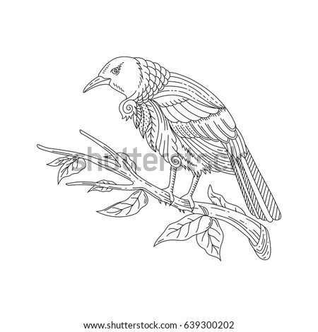 adult coloring tui bird