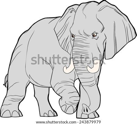 adult elephant  african