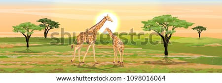 Adult giraffe mother and her little baby giraffe. African savannah. Realistic vector landscape. The nature of Africa. Reserves and national parks.
