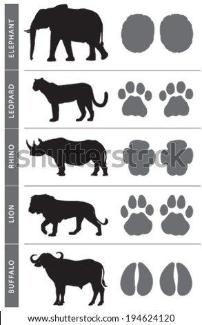 Africa S Big Five Animal African Lion Footprints