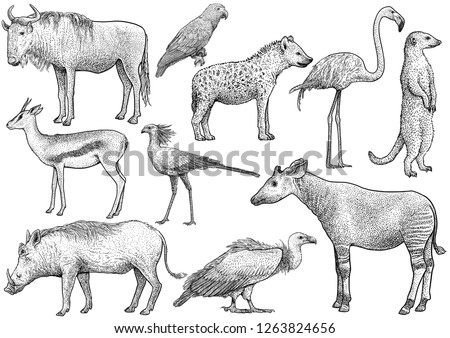 African animal collection, illustration, drawing, engraving, ink, line art, vector