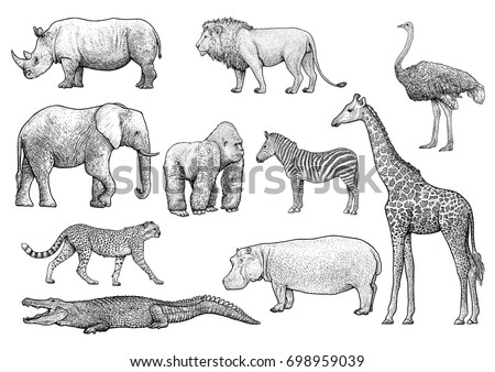 African animals illustration, drawing, engraving, ink, line art, vector