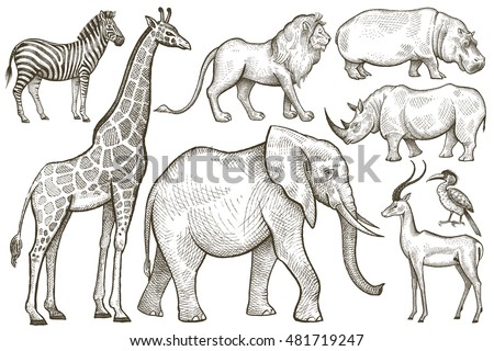African Animals Set Elephant Giraffe Zebra Lion Hippo Rhino
