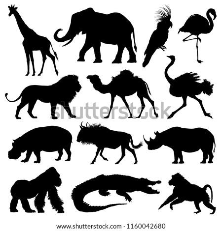 African animals silhouettes set. Giraffe, elephant, antelope, hippopotamus, rhinoceros, camel, ostrich, crocodile, flamingo, cockatoo, baboon, gorilla, lion. Vector illustration.