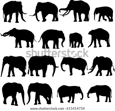 african elephant and asian