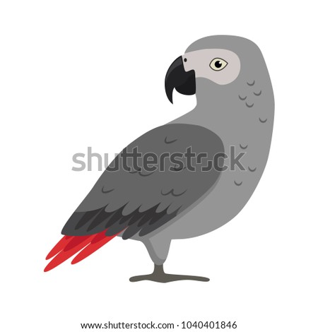 african grey jaco parrot icon