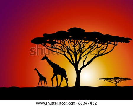 African safari theme vector illustration with giraffe and acacia tree silhouette