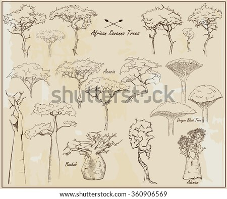 African savanna trees, exotic trees, set of different hand drawn trees