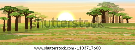 African savannah. Grass, acacia and baobab trees. Realistic vector landscape. The nature of Africa. Reserves and national parks. ストックフォト ©