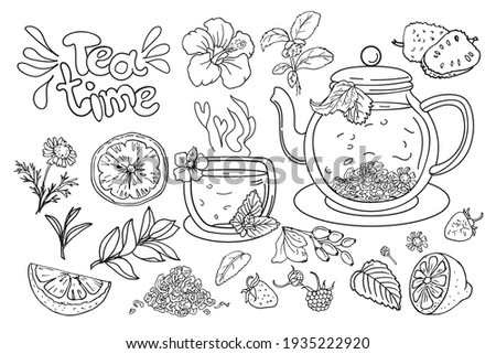 Afternoon tea time. Hand-drawn vector set of tea ceremony elements: teapot, cup, lemon, hibiscus flowers and variety of berry branches.  Chamomile tea in a transparent pot.Illustration in sketch style