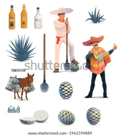 Agave tequila production vector design with cartoon blue agava cactus, tequila alcohol drink bottles and Mexican man with sombrero. Farmer jimador, donkey, agave pinas and coa machete knives