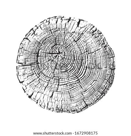 aged round piece of tree wood
