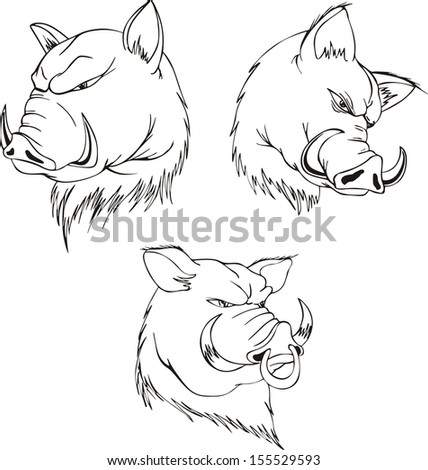 aggressive boar heads set of black and white vector tattoo designs 155529593 shutterstock. Black Bedroom Furniture Sets. Home Design Ideas