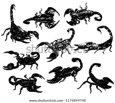 aggressive poisonous scorpions