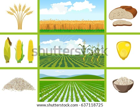 agricultural fields   wheat