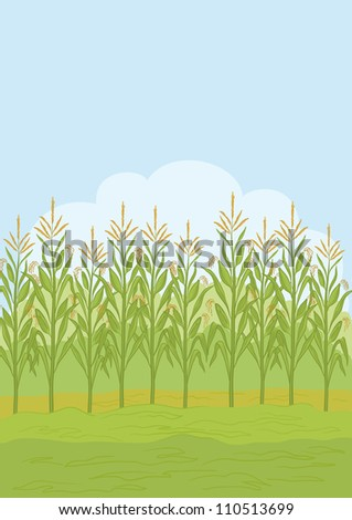 Agricultural rural landscape, field with green maize. Vector illustration