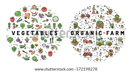 Agriculture farming and Vegetables flat infographics. Colorful thin line farm icons, Organic food symbols. Vector illustration
