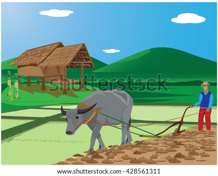 agriculturist plow paddy field