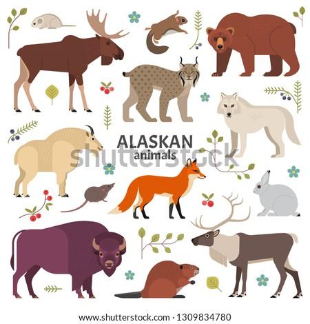 alaskan animals vector