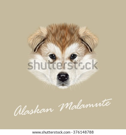 alaskan malamute dog vector