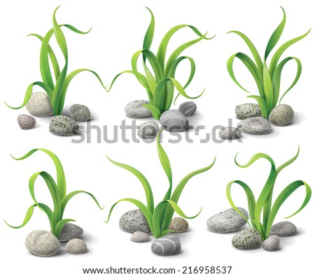 algae illustration algae and stones set isolated on white stock vector 4580