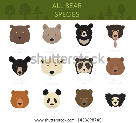 all world bear species in one