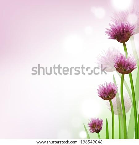 allium  flower card  with