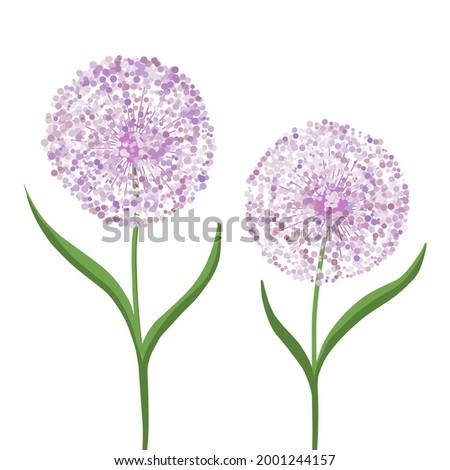 allium flower  decorative bow