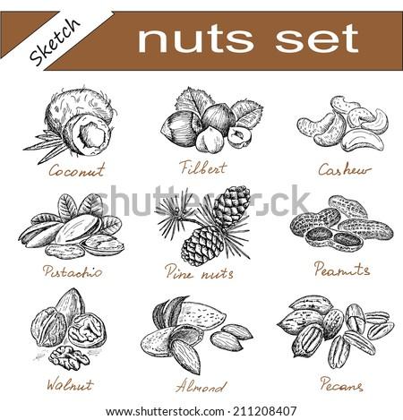 almond and assorted nuts set of vector sketches