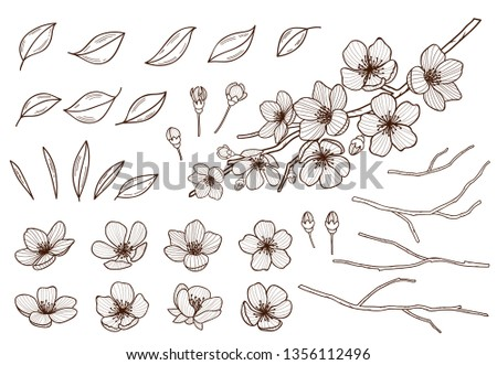 Almond blossoms hand drawn set. Spring flowers leaves ,buds and branches collected. Sakura,cherry, apple tree,plum blossoming elements isolated on white background. Ink pen vector illustration