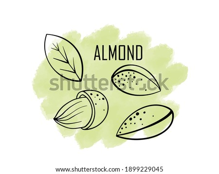 Almond nut, vector cartoon illustration. beautiful nuts, fresh nuts, hazelnuts, a handful of nuts, nut-in-shell almonds in the shell, shelled almonds, fresh almonds. Can be used for cafe, menu, shop