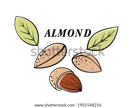 Almond nut, vector cartoon illustration. beautiful nuts, fresh nuts, hazelnuts, a handful of nuts, nut-in-shell almonds in the shell, shelled almonds, fresh almonds. Can be used for cafe, menu