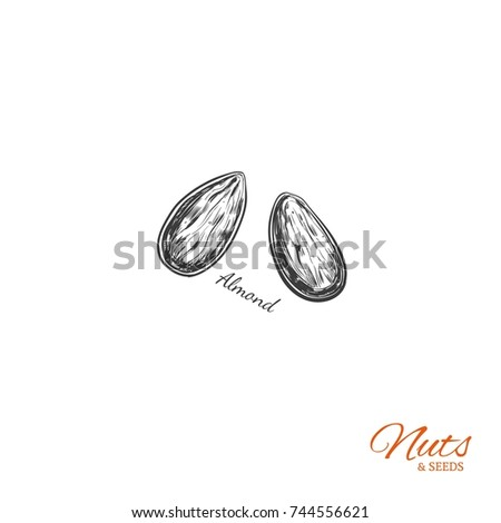 Almond. Vector  Hand drawn  objects . Isolated on white. Sketch style