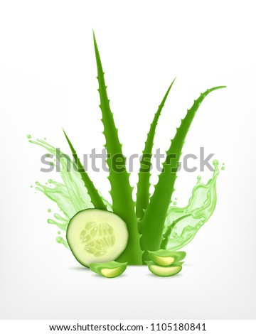 aloe and cucumber vector icon