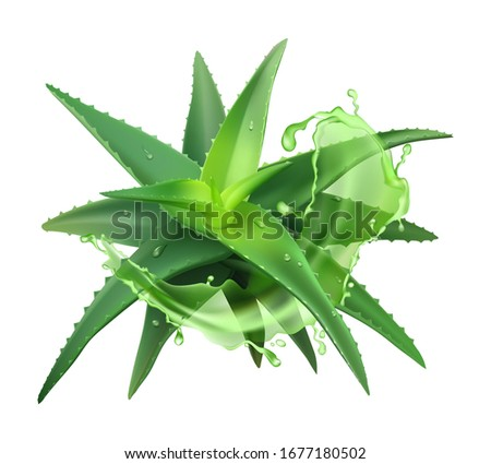 Aloe realistic plant. Green aloe vera, medicine plant and juice splash, natural cosmetology component and skin cream isolated vector illustration