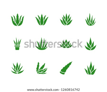 Aloe vera flat glyph icons. Succulent, tropical plant vector illustrations, signs for organic food, cosmetic. Solid silhouette pixel perfect 64x64.