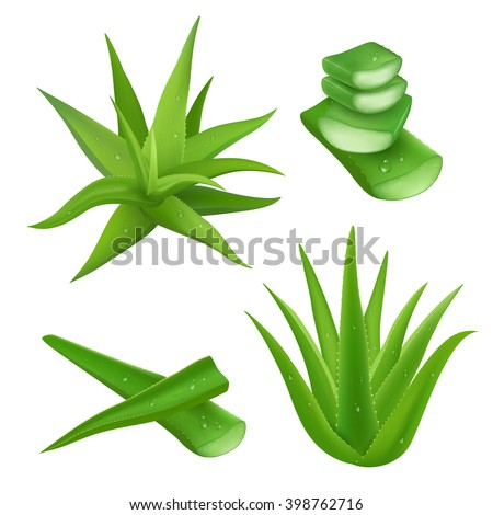 vector images illustrations and cliparts aloe vera plant realistic