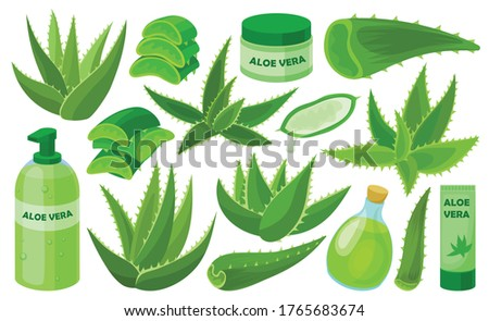 Aloe vera vector cartoon set icon. Vector illustration cactus on white background. Isolated cartoon set icon aloe vera.