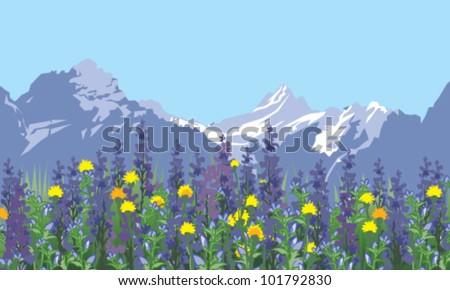 alpine meadow landscape