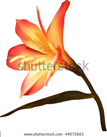 Amaryllis branch flower