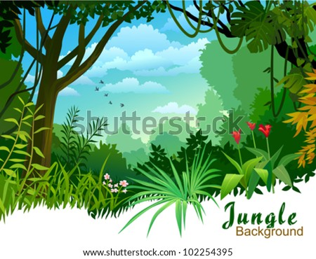 AMAZON JUNGLE TREES AND WILDERNESS