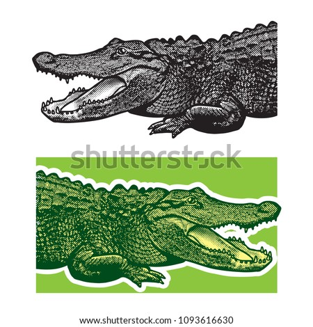 American alligator. Florida gators. Monochrome vector graphic illustration of reptile - drawn graphic art in the engraving style, design element for logo or template.
