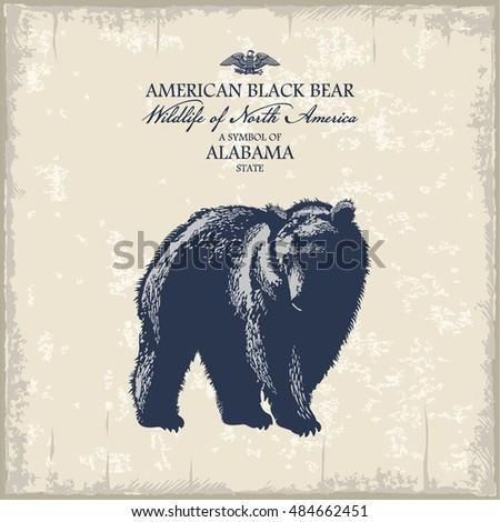american black bear  wildlife...